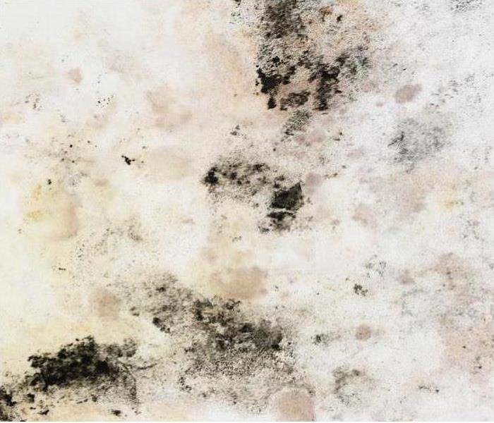 Mold Remediation Each Surface Type Warrants a Different Approach When it comes to Mold
